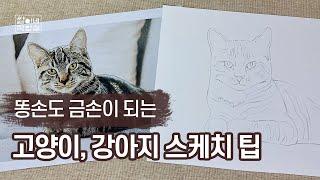 [반려동물 그리기] 초보자도 쉽게 따라할 수 있는 고양…