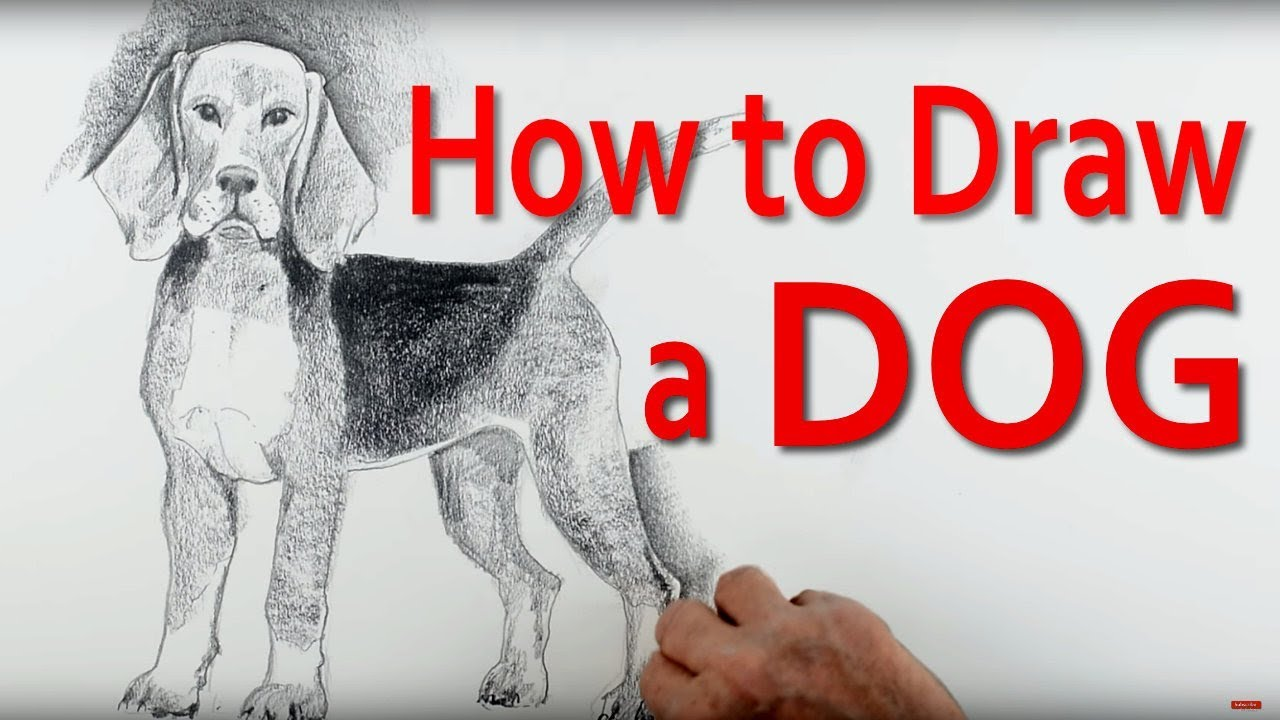 How To Draw Animals Step By Step: Part 5 Dog