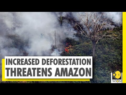 Amazon rainforest fires sharply increased in June | Forest fires | World News