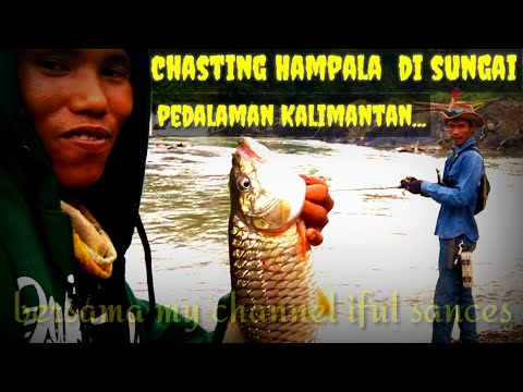 Chasting Hampala Di Pedalaman Sungai Kalimantan