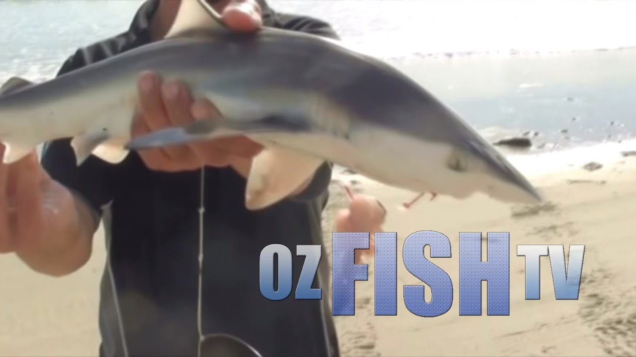 Download Oz Fish TV Season 3 Episode 6 - Triple Threat