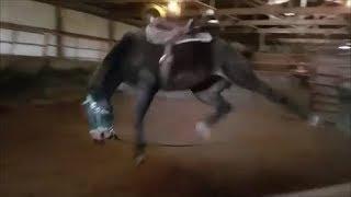DANGEROUS Bucking horse gets fixed!!!