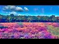 Swedish House Mafia - Dont You Worry Child ft John Martin 432hz [Dance]