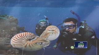 Local couple shares deep-sea-diving adventures
