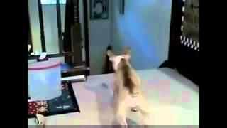 Кот напугал собаку