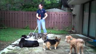 Introducing A Dog Reactive Dog - Take The Lead K9 Training