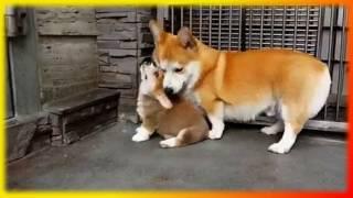 Прикольное о животных Для детей Создай себе хорошее настроение