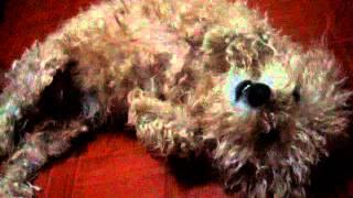 Teach Me How To Dougie (DOG VERSION)