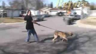 Jaw-dropping Dog Training Skills Being Put To The Test !!!