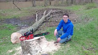 THE UNTHINKABLE HAPPENED WHILE CUTTING DOWN A HUGE ASH TREE NEAR A CABIN!! TIMBERPRO TAKES A TUMBLE!