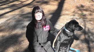 Kyle, Labrador, Episode 9 (dog Obedience) - Sunl Atlanta Dog Training