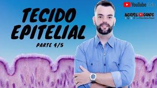 Tecido Epitelial - Parte 4/5 - Epitélio Glandular - Prof  Otávio Plazzi