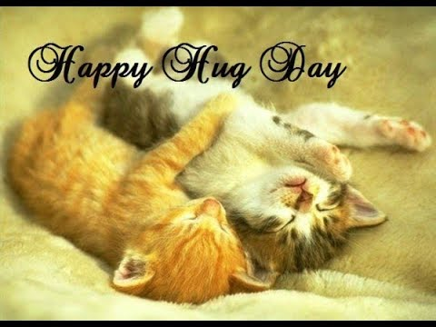 Image result for Happy Hug Day cats