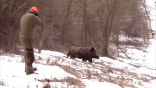Best of Driven Wild Boar Hunting (ep 2) - Ultimate Hunting