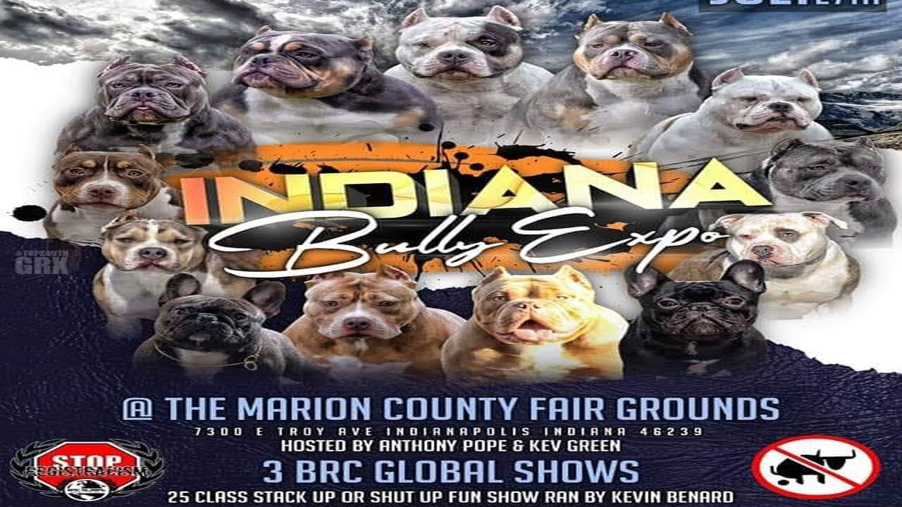 AMERICAN BULLY DOG INDIANAPOLIS,IN JULY 27TH 2 BRC GLOBAL