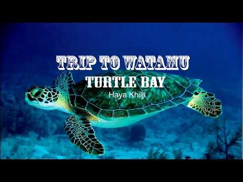 Trip to 'Turtle Bay' watamu