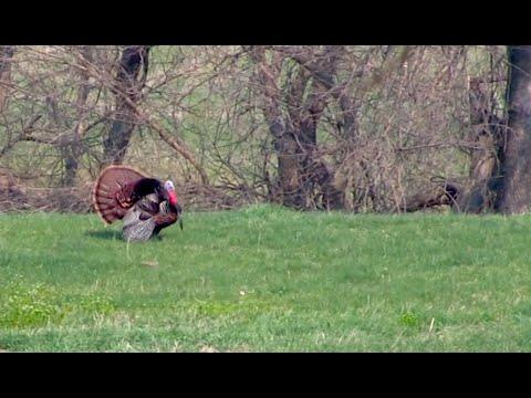 Public Land Turkey Hunting In Kansas