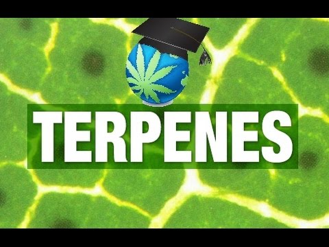 What Are Terpenes – Uses in Cannabis