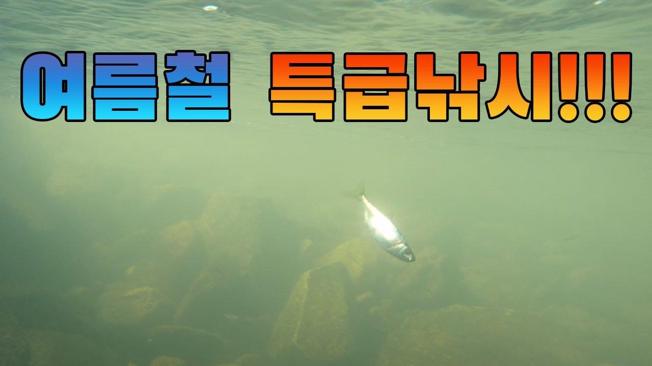 요놈이 힘이 무지막지하네!!!! 구독자 7만 감사이벤트~~^^ / freshwater fish fishing in summer