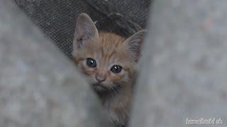 2015 6 2 今日出会った野良猫達 today stray cat and kitten【瀬戸の野良猫日記】