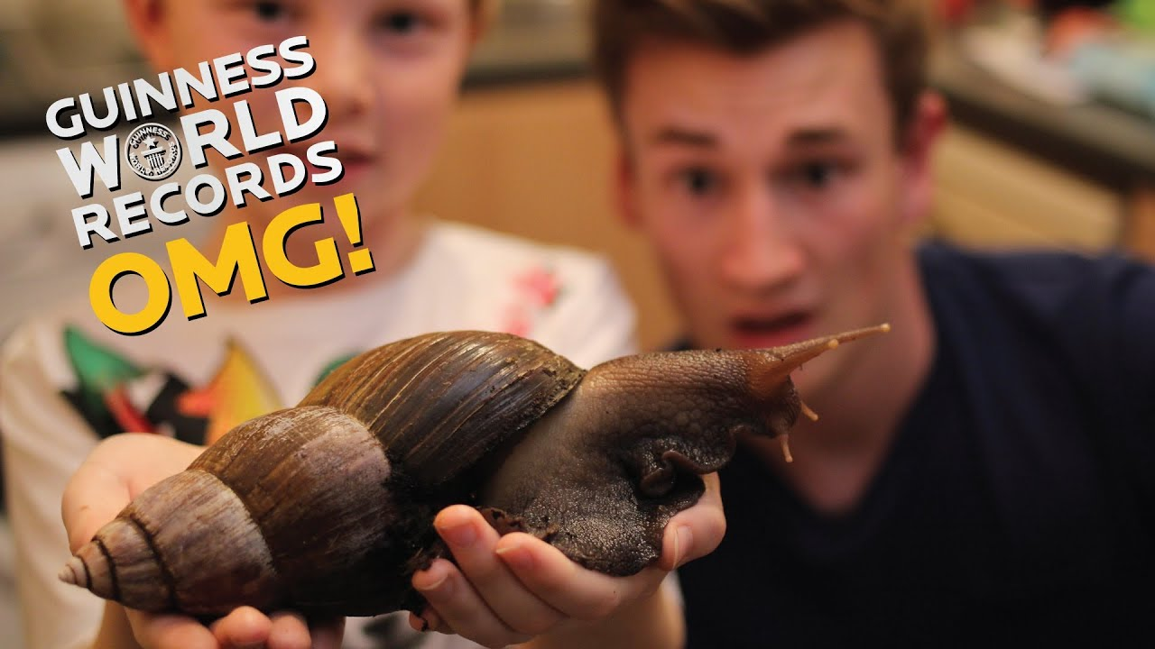 giant-african-snail-pet