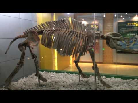 Beijing Museum of Natural History - Beijing - China (1)