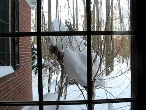 Dumb Bird Flies Into Window YouTube