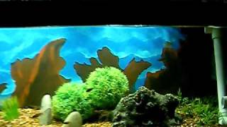 Diy Background Aquarium Done Cheep