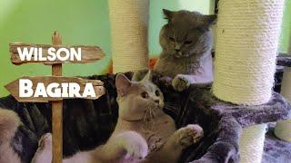 юмор humor kitten коты кошки смешныекоты Очень смешное видео