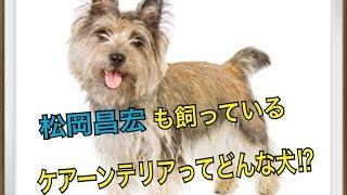 ペットで犬を飼おうと迷っている方へ〜ケアーンテリア〜 世の中には様々...