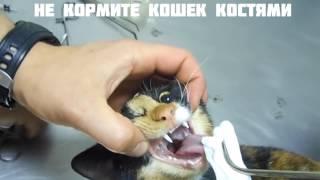 КУКИ В ОПАСНОСТИ  SlivkiShow