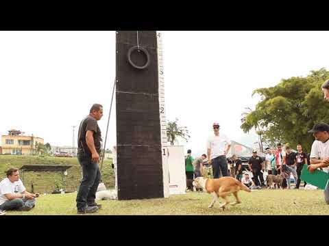 Revista PitBull Colombia - 1er. Regional Eje Cafetero 2014 - Escala Vertical
