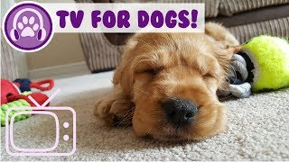 Videos for Dogs! TV for Your Dog to Watch! Entertainment for Dogs!