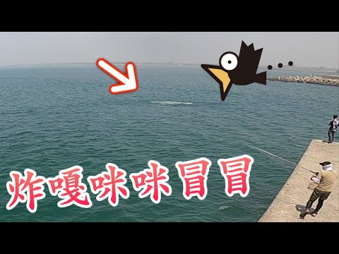 ~Something big attacking bait ball at harbor of southern Taiwan