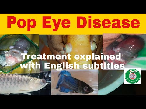Pop Eye Disease - Medicines & Treatments
