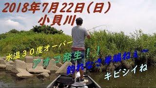 やはり連日猛暑の続く関東地方。 水温も安定の30度オーバー(汗) mus...