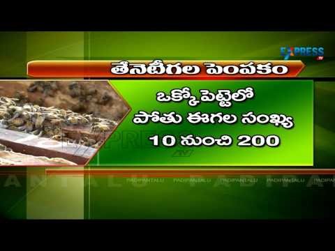Honey Beekeeping or Apiculture Self Employment for Landless and Unemployed Youth | Paadi Pantalu