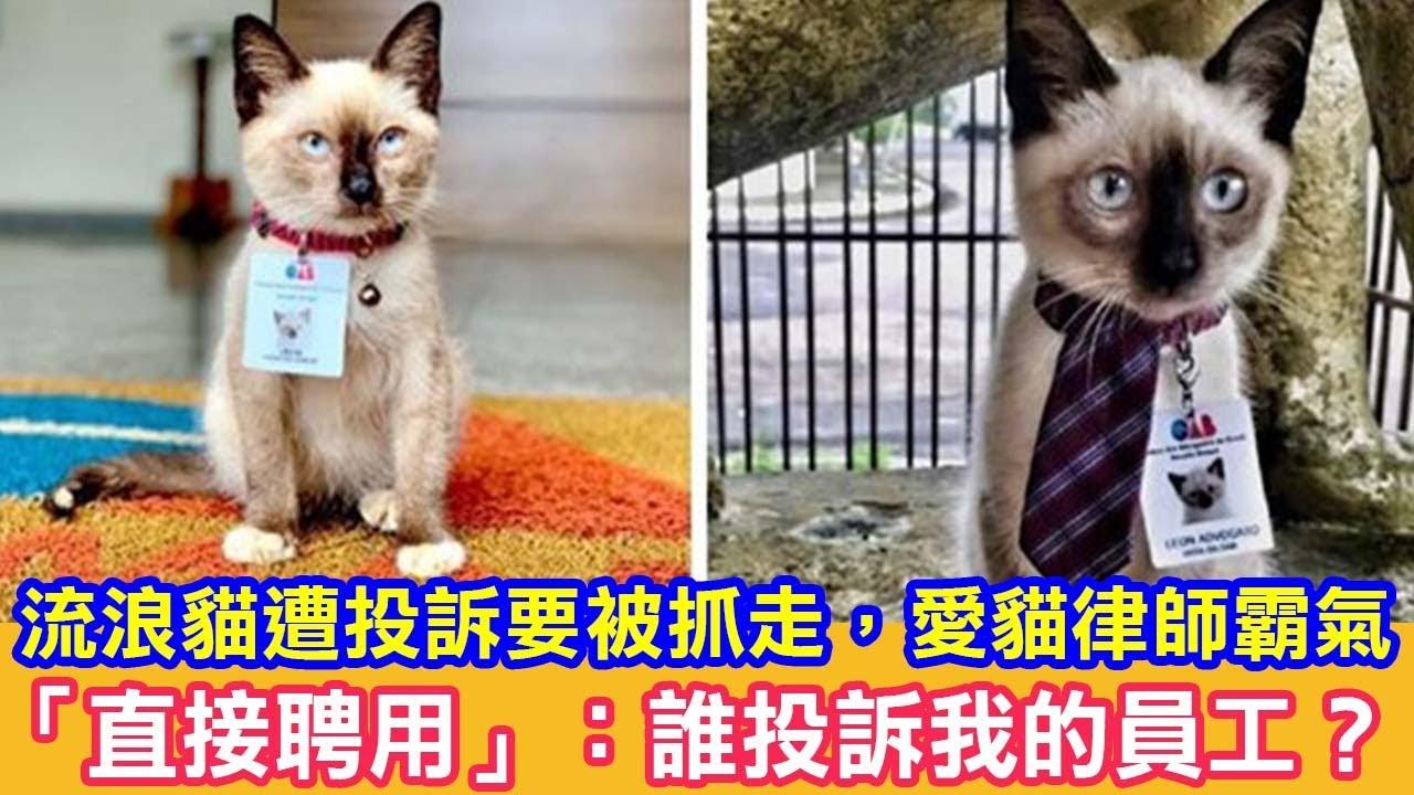 流浪貓遭投訴要被抓走,愛貓律師霸氣「直接聘用」:誰投訴我的員工? 貓咪故事