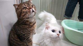 구경왔다가 친구 대신 목욕해준 고양이