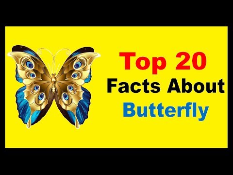 Butterfly - Facts