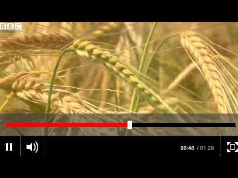 BBC News   Study sparks organic foods debate