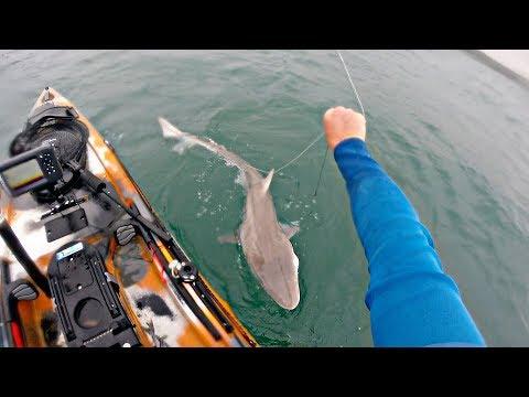Hunting Sharks - Kayak Fishing - Stackpole - Wales