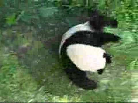 Panda Tumbling YouTube - This bear is rolling down a hill is having the time of his life