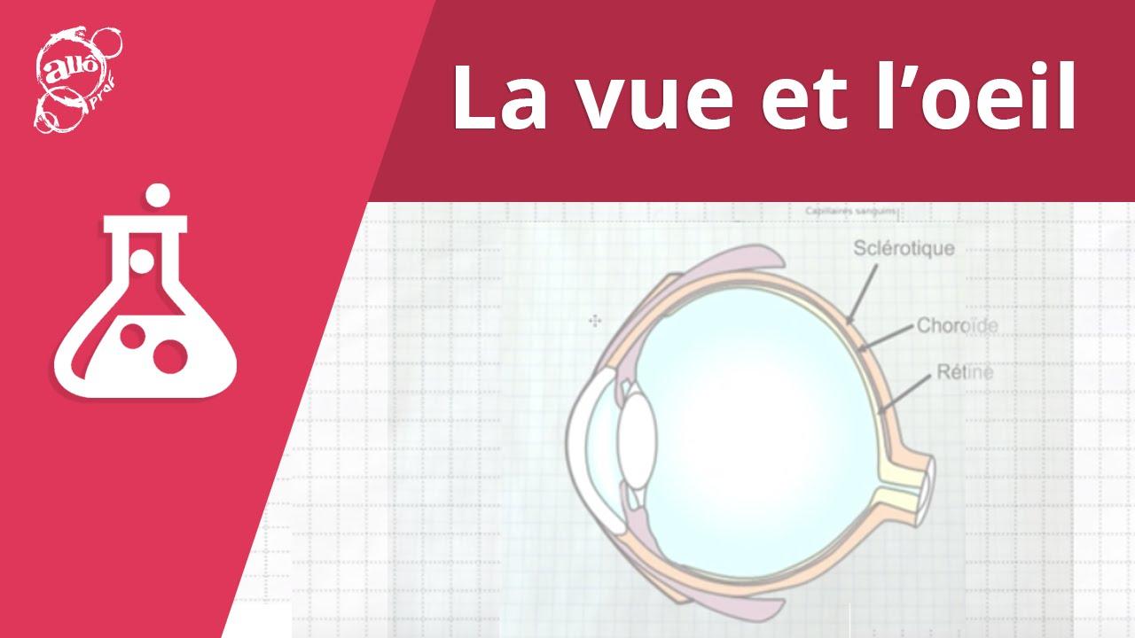 Download Allô prof - La vue et l'oeil