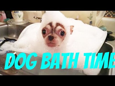 Dogs just don't want to bath / Funny dog bathing compilation)