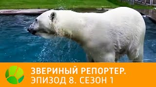 Звериный репортер  Эпизод 8  Сезон 1