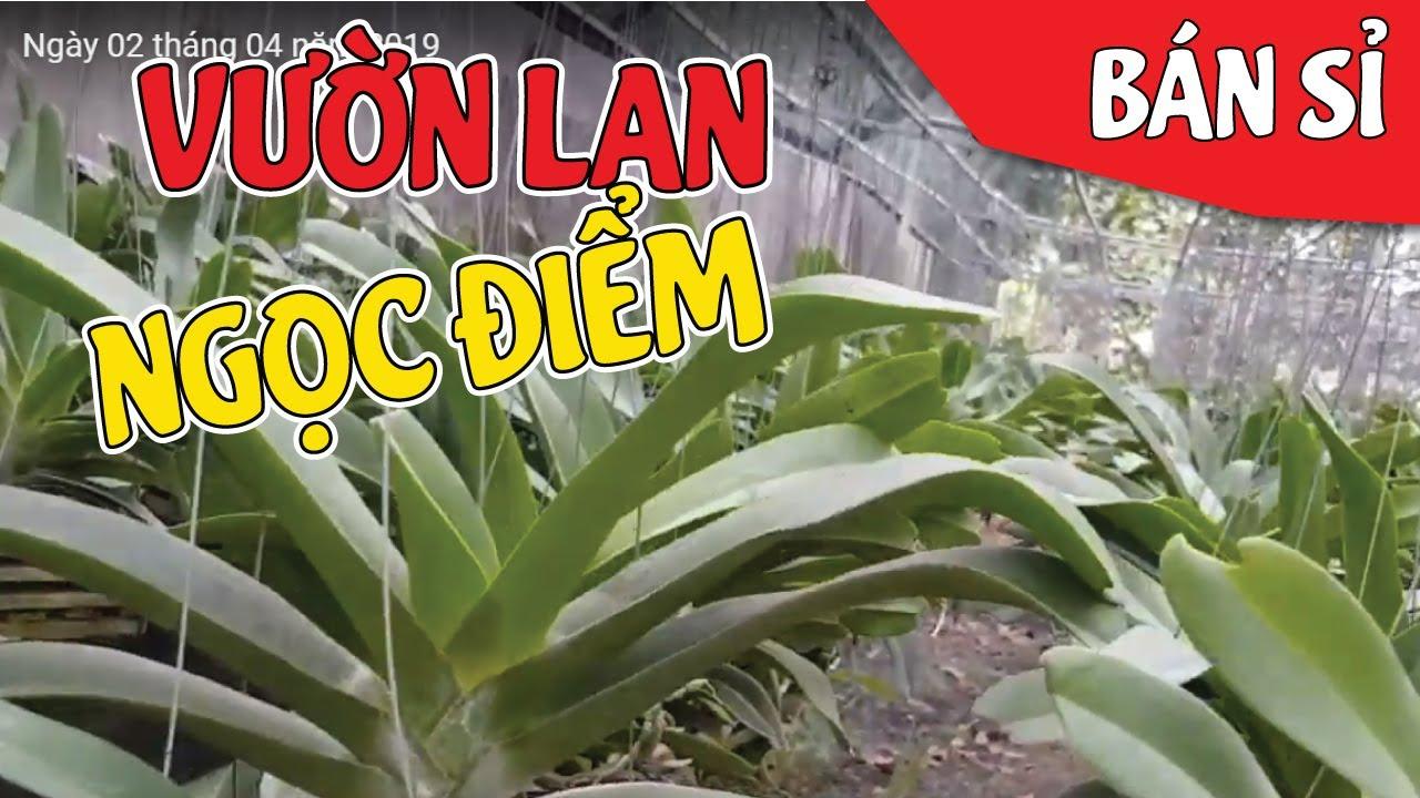 Vườn Lan Ngọc Điểm Lớn Nhất Nhì Vĩnh Cửu Đồng Nai | #MêLanTV