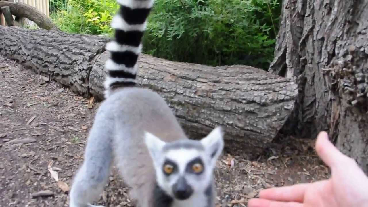 ring fre zoo i Sjælland