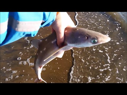 NZ Basic Fishing   Surfcasting   Finally Caught Some Fish (just The Wrong Species....)