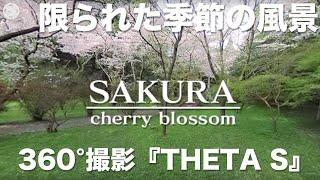 リコー【THETA S】を使って秋月の桜を撮影しました。